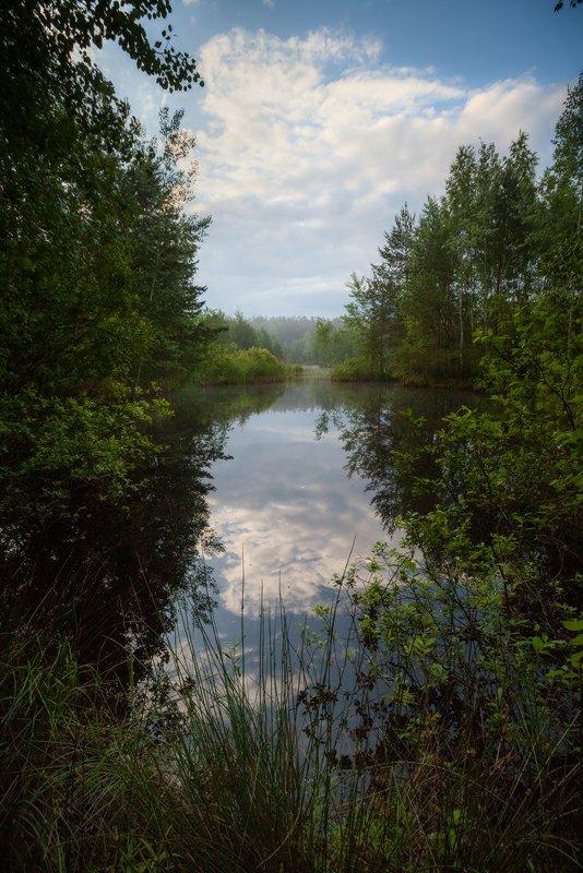 лето, утро, озеро, лес, благодать, беларусь, Копычко Михаил