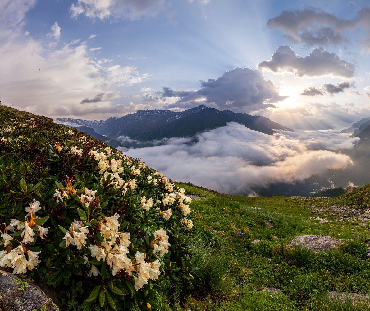 рододендрон, Эльбрус, Чегет, Приэльбрусье, Кавказ, цветы, лучи, Арсений Кашкаров