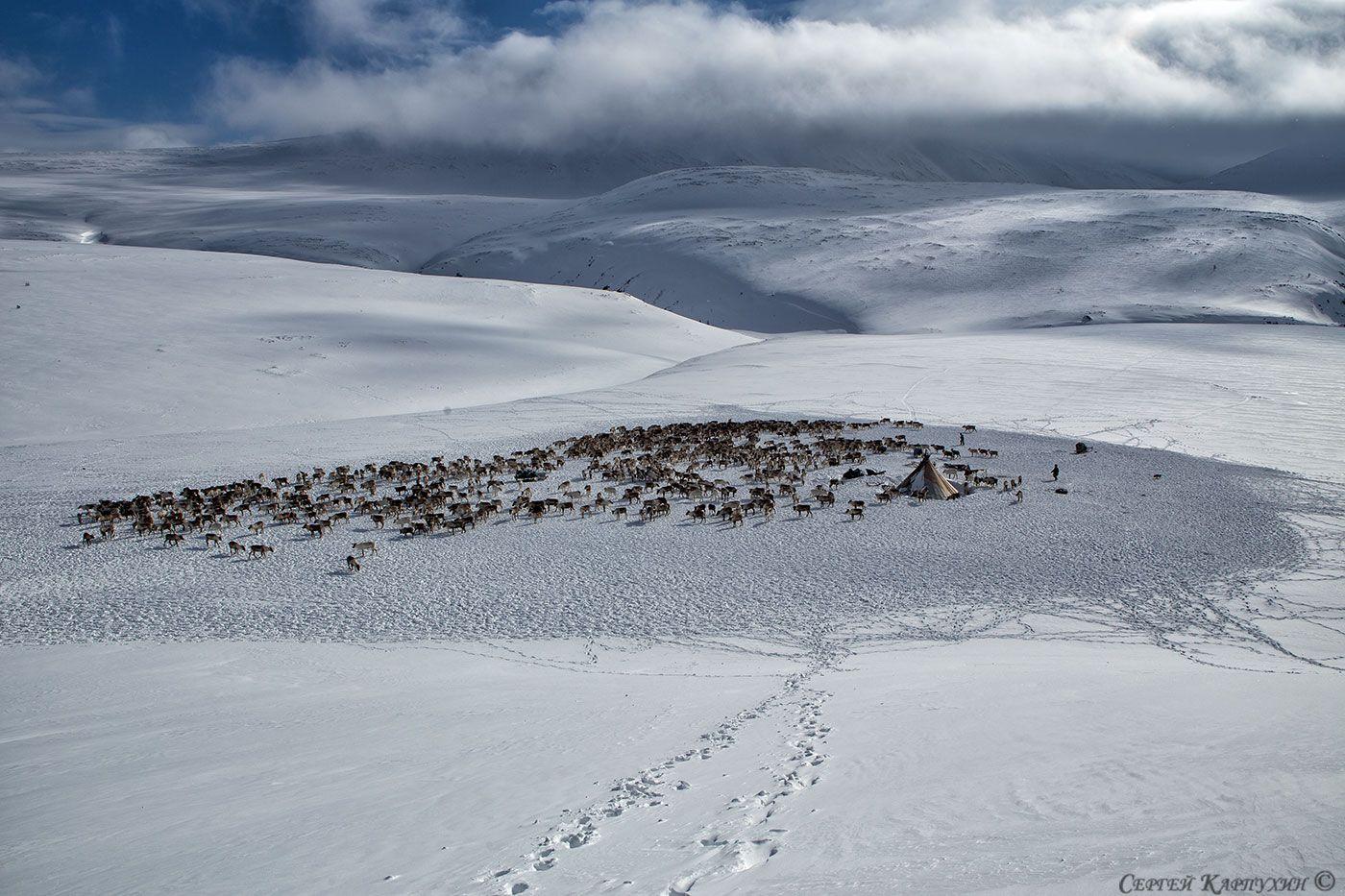 полярный урал, стойбище, оленеводы, чум, олени, горы, снег, Сергей Карпухин