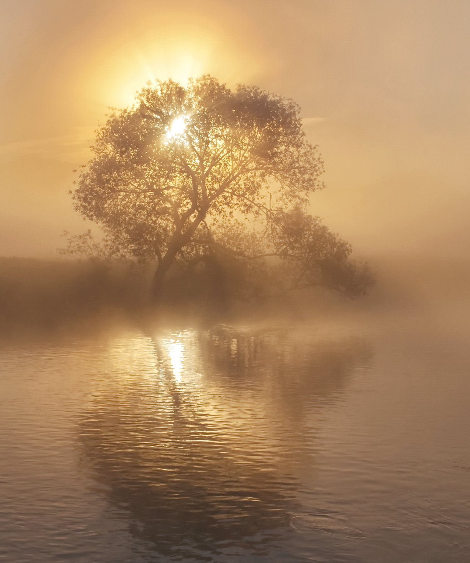 утро, туман, весна, Александр Гвоздь