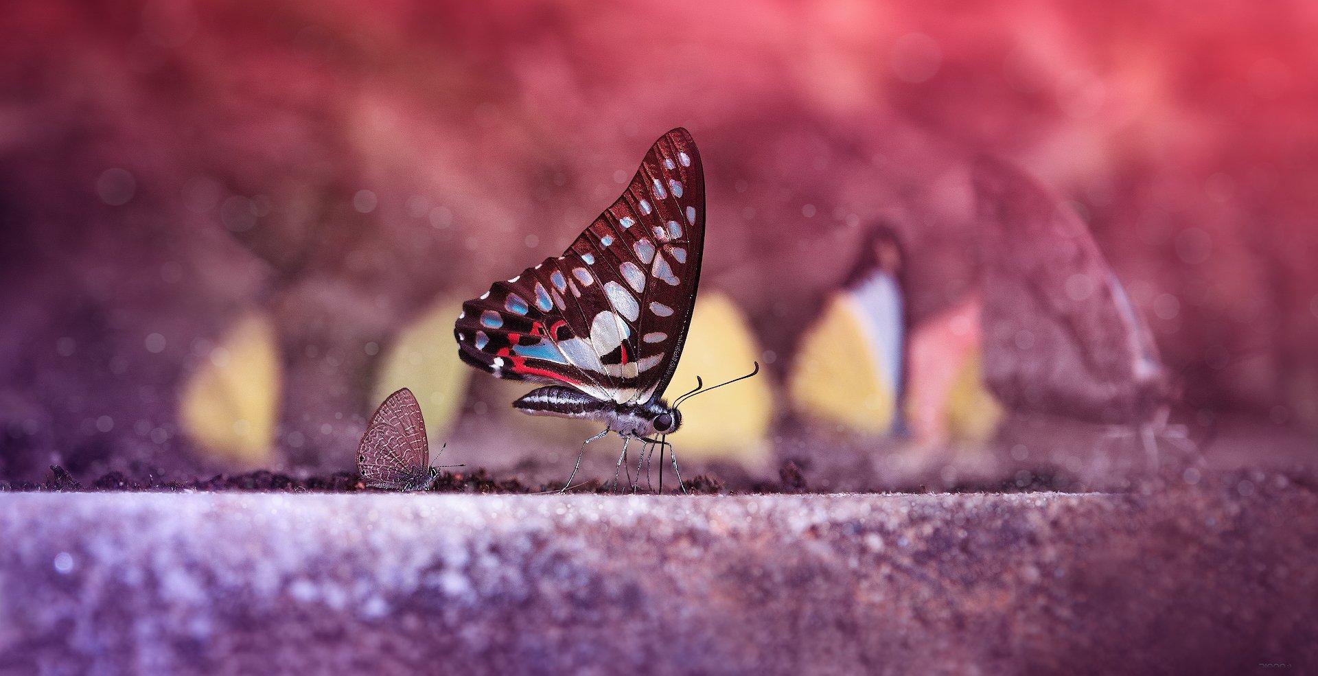 природа, бабочки, макро, Дмитрий Посевич