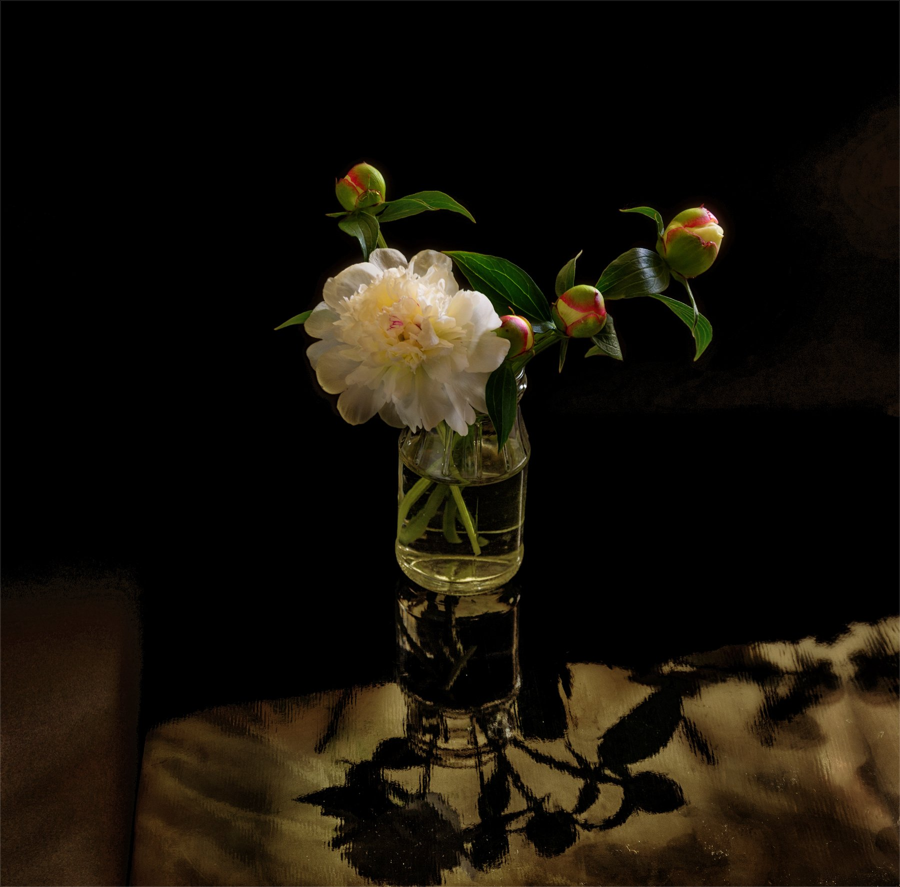 still life, натюрморт,  цветы, природа,  винтаж, пионы, минимализм, Михаил MSH