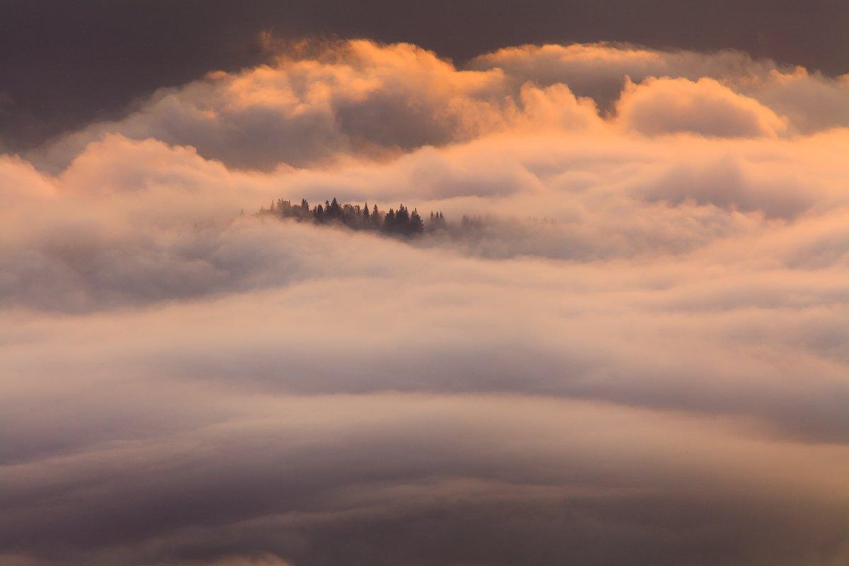 рассвет, туман, карпаты, горы, Антон Петрусь
