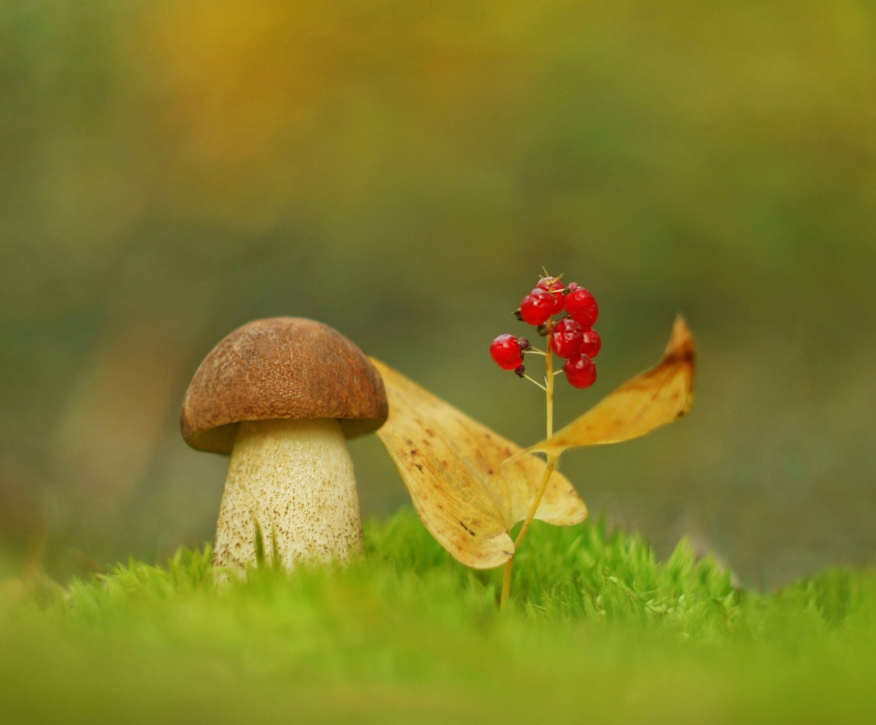грибы, природа, макро, Александр Гвоздь