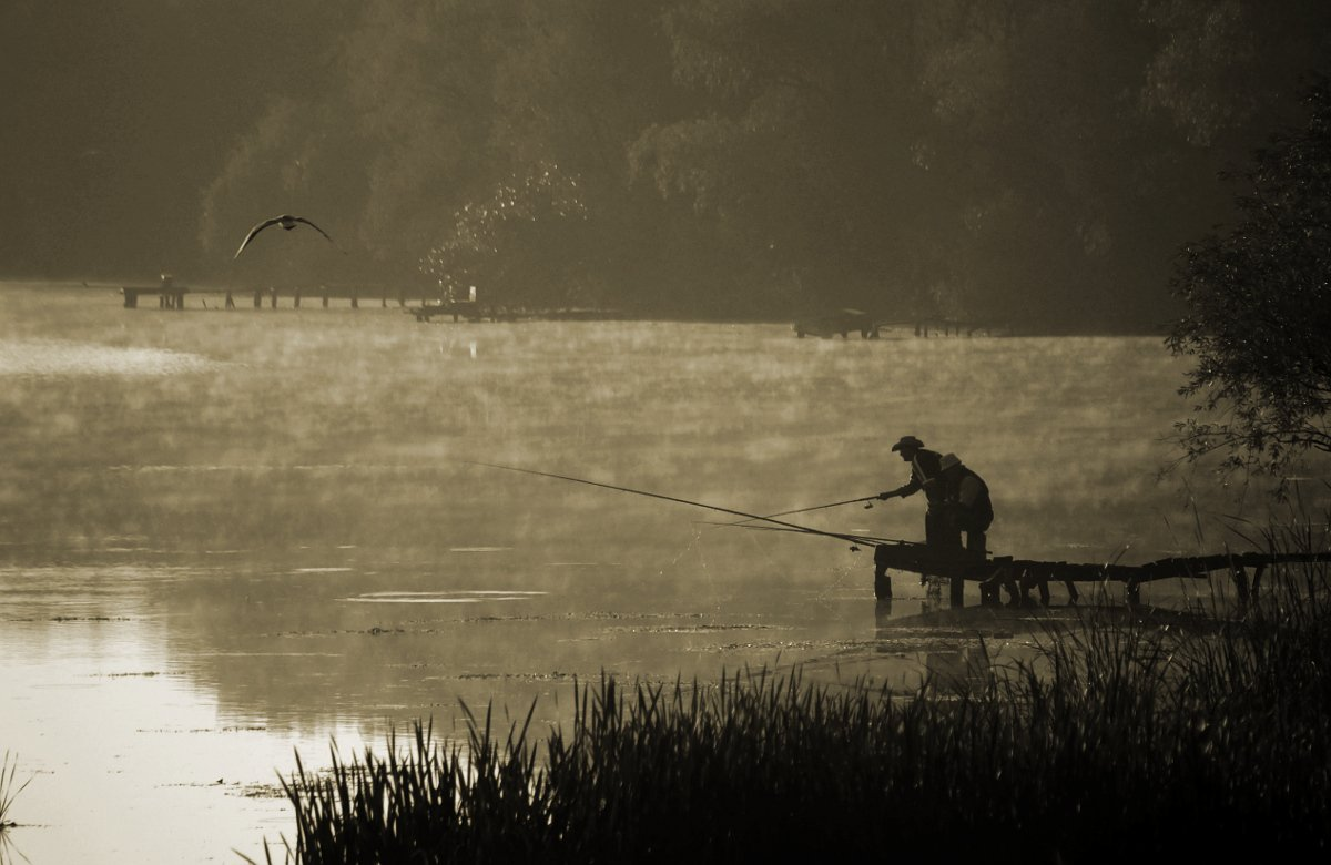 утро, рыбалка, чайка, туман, Евгений Смердов