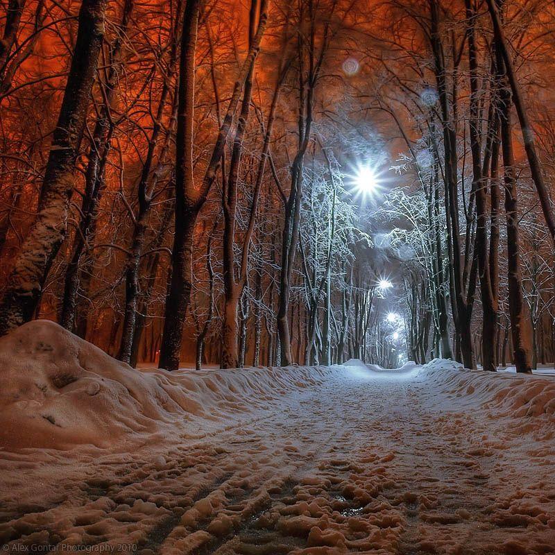 alex gontar, darkness, dusk, fiery-fish, kiev, lantern, night, olympus, park, public garden, red, snow, square, the capital, the winter, trees, ukraine, Alex Gontar