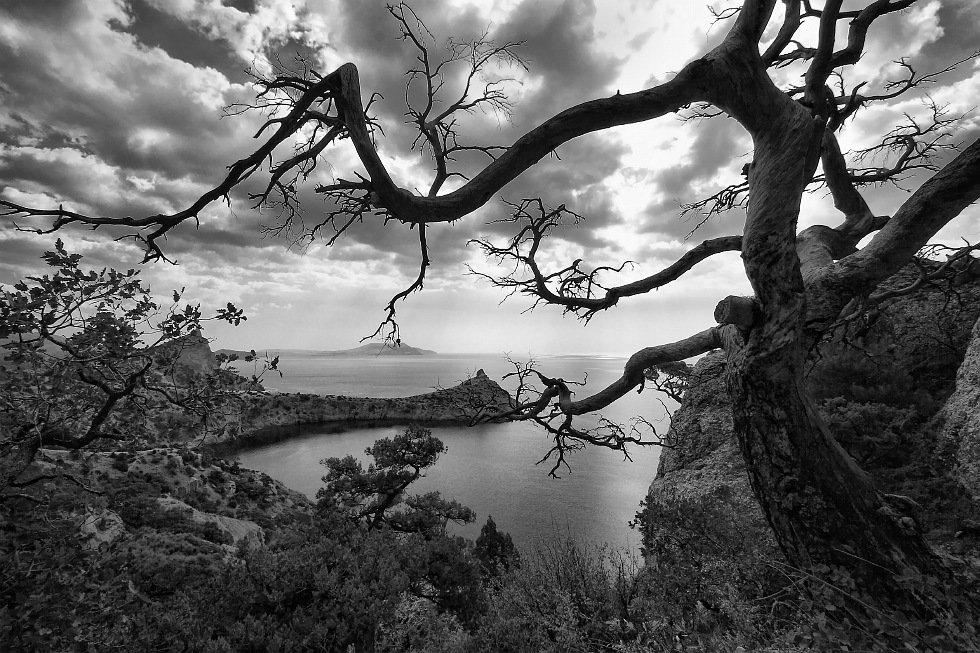 фото, пейзаж, юбк, новый, свет, дерево, море, Ольга Горелова