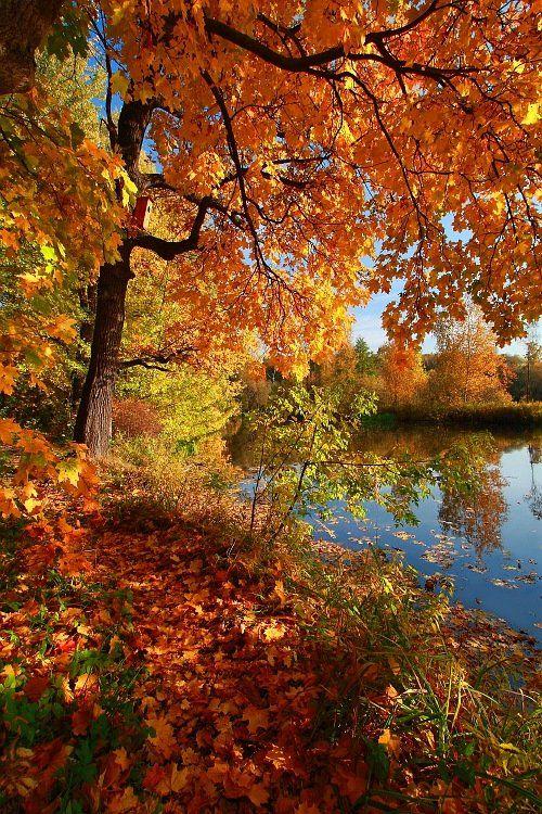 осень, пейзаж, фото, желтые, листья, Ольга Горелова