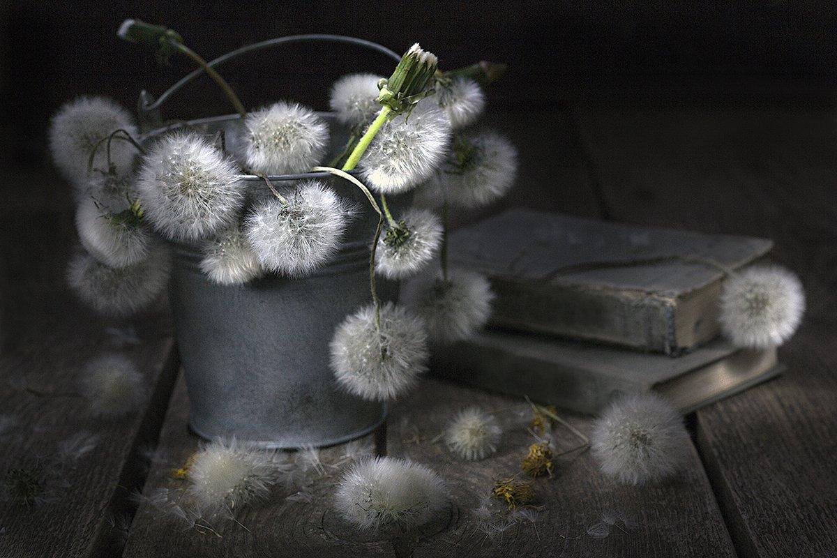одуванчики, цветение, старые цветы, цветы, ведерко, деревянный стол, старые книги, винтаж, ретро, натюрморт, Наталья Бочкарева