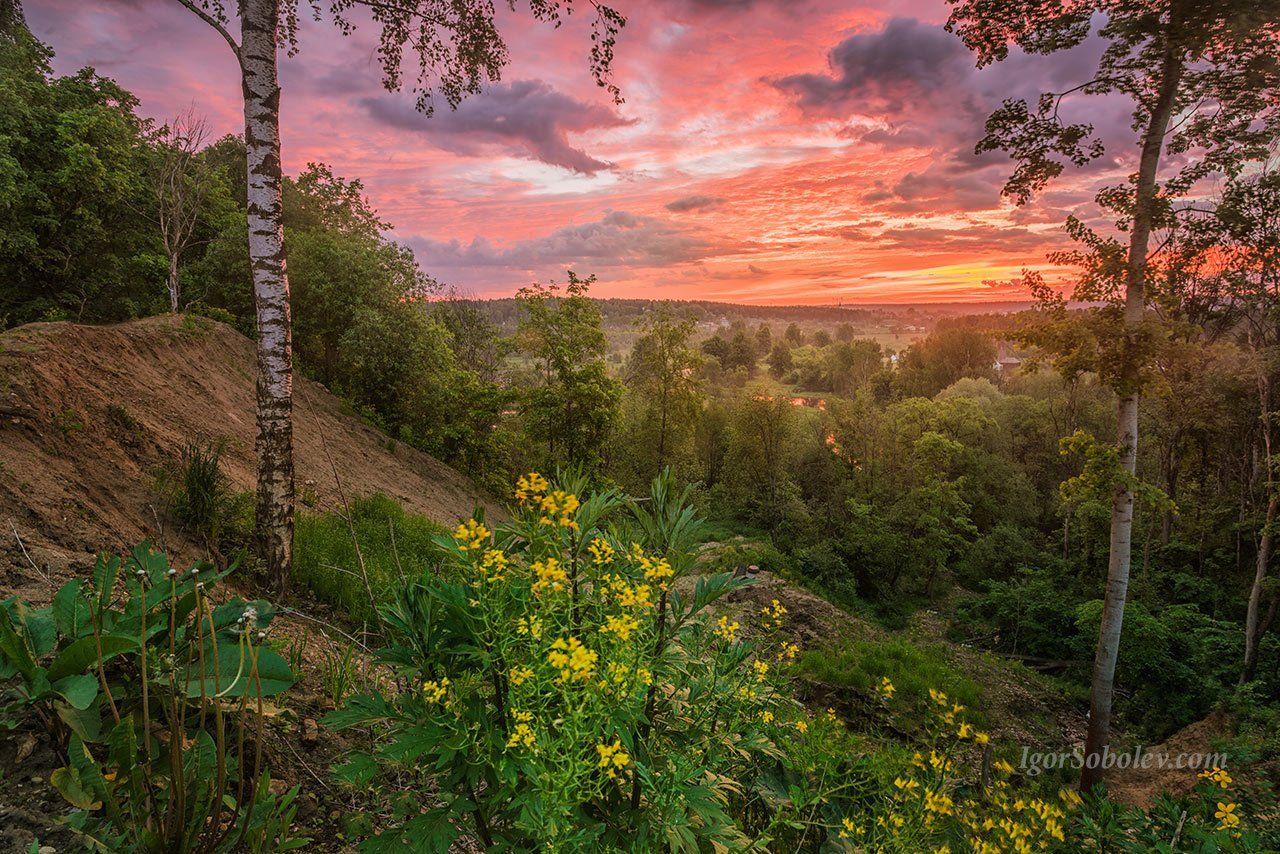 утро, пейзаж, облака, рассвет, цветы, Соболев Игорь