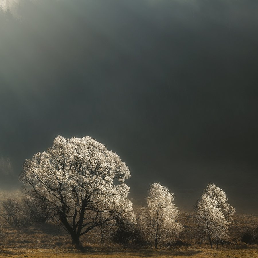 landscape,canon,mist,light, Iza,Darek