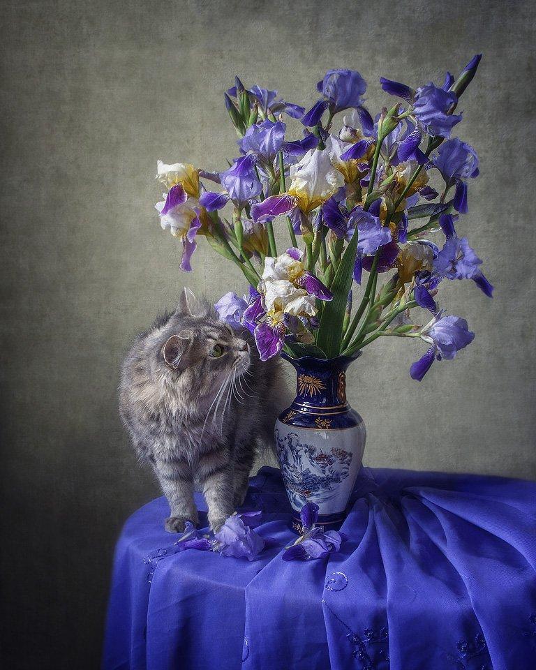 фото, домашние животные, питомцы, любопытная кошка, кошка Масяня, букет ирисов, , Ирина Приходько