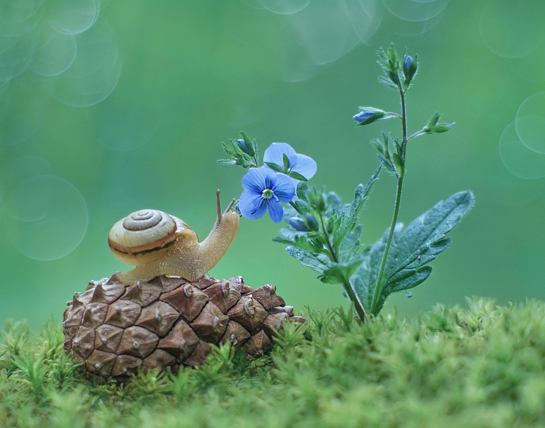 улитка, лето, природа, Александр Гвоздь