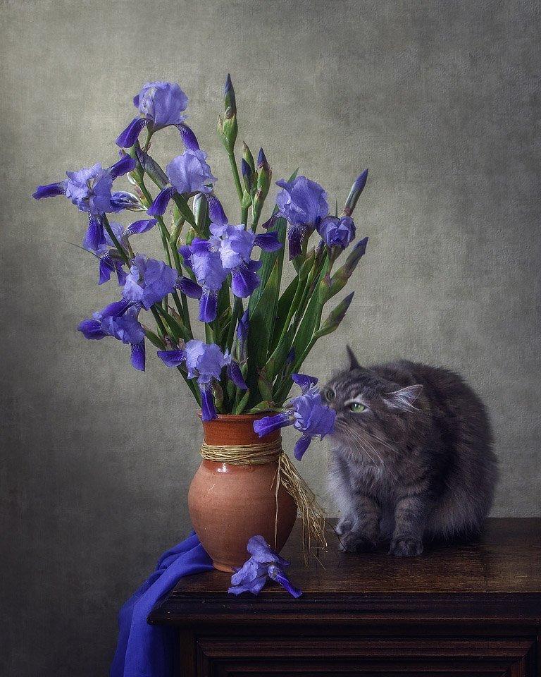 фото, домашние животные, питомцы, любопытная кошка, кошка Масяня, букет ирисов, Ирина Приходько