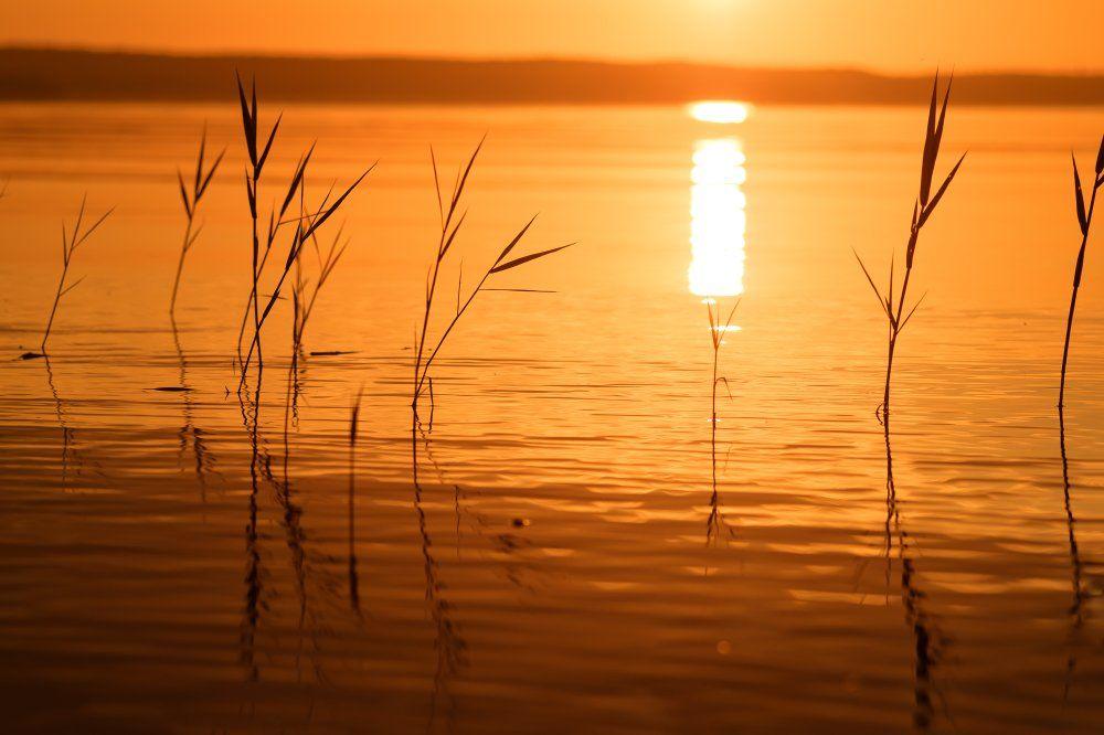 природа,утро,рассвет,трава,красота,лето,июнь, Юлия Лаптева
