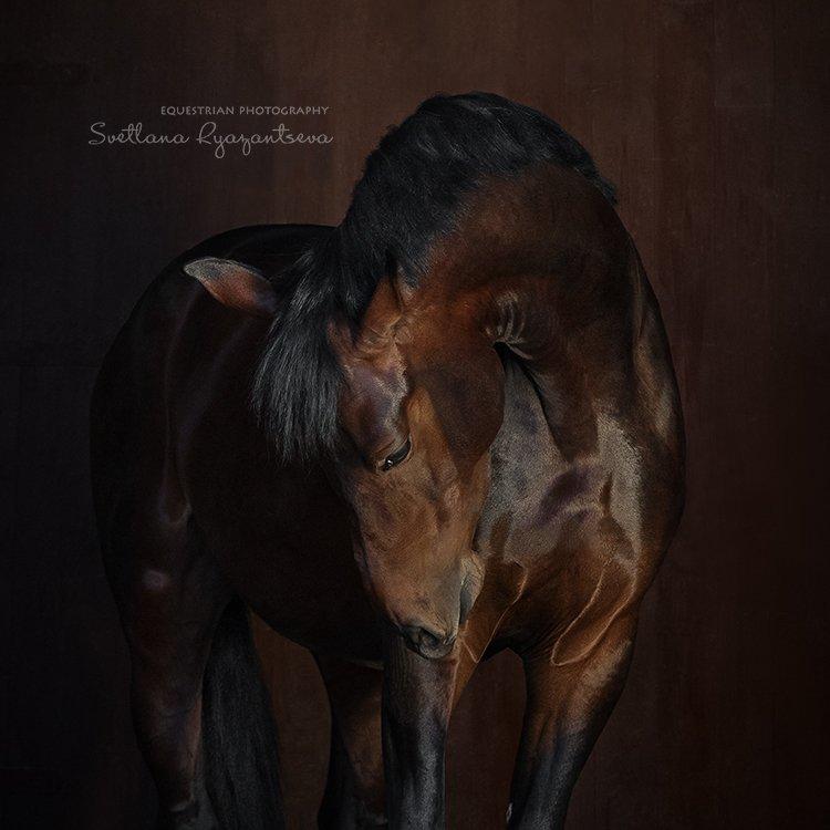 horse, portrait, портрет, лошадь, лошади, Svetlana Ryazantseva