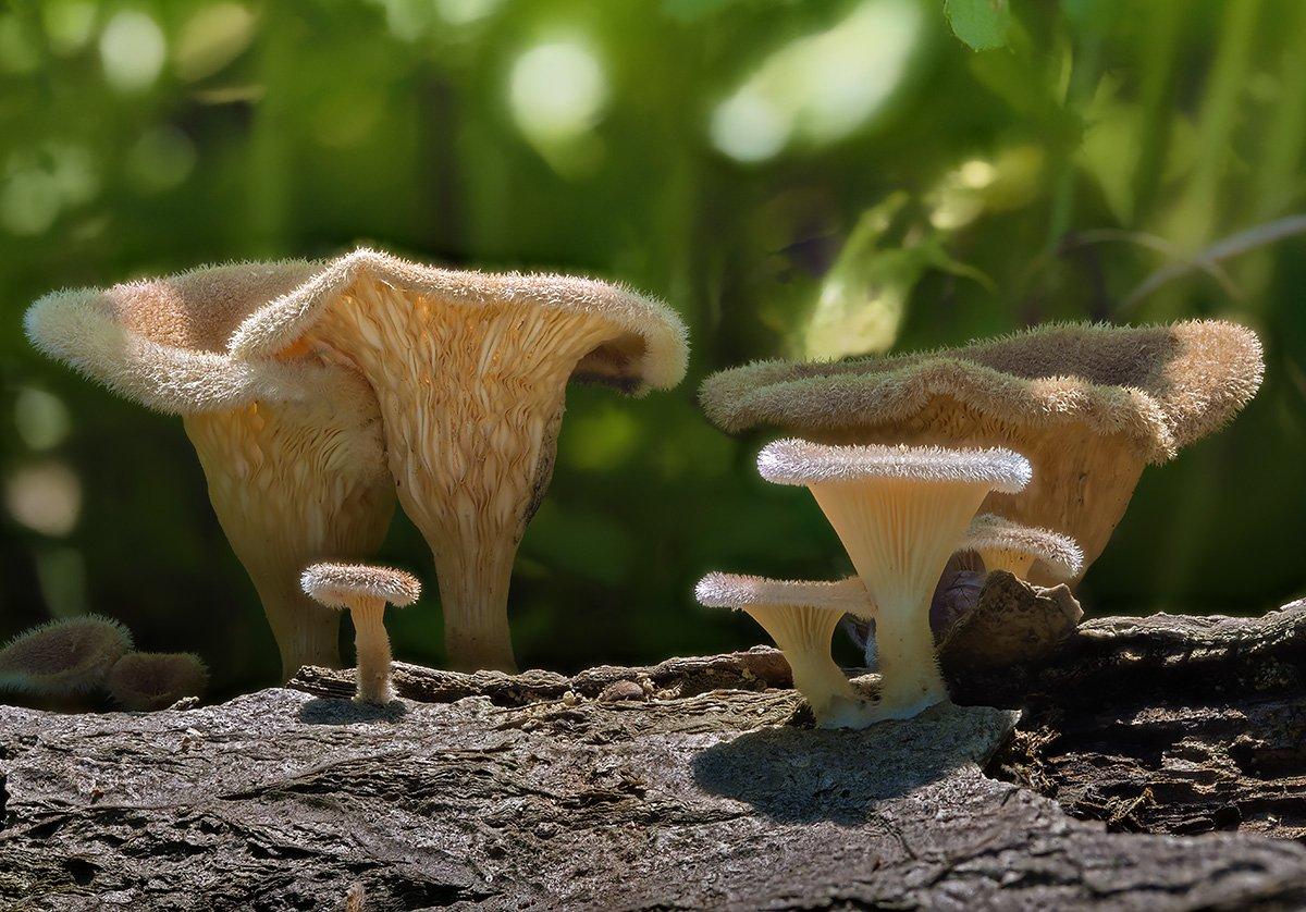 грибы, Evgeny Slobodskoy