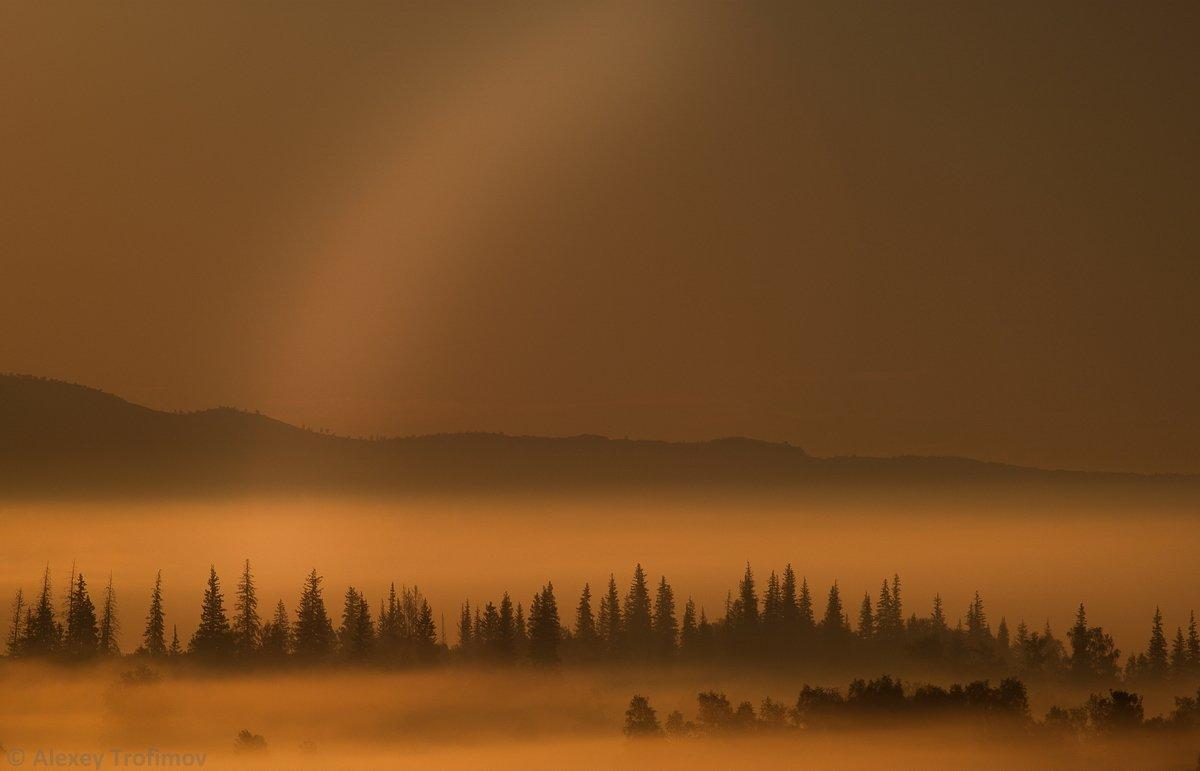 туман, тайга, рассвет, Алексей Трофимов