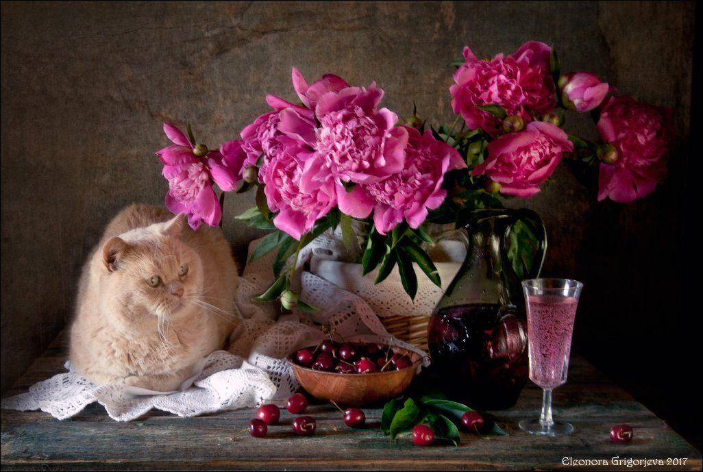 натюркотики, натюрморт, кот, пионы, лето, Eleonora Grigorjeva