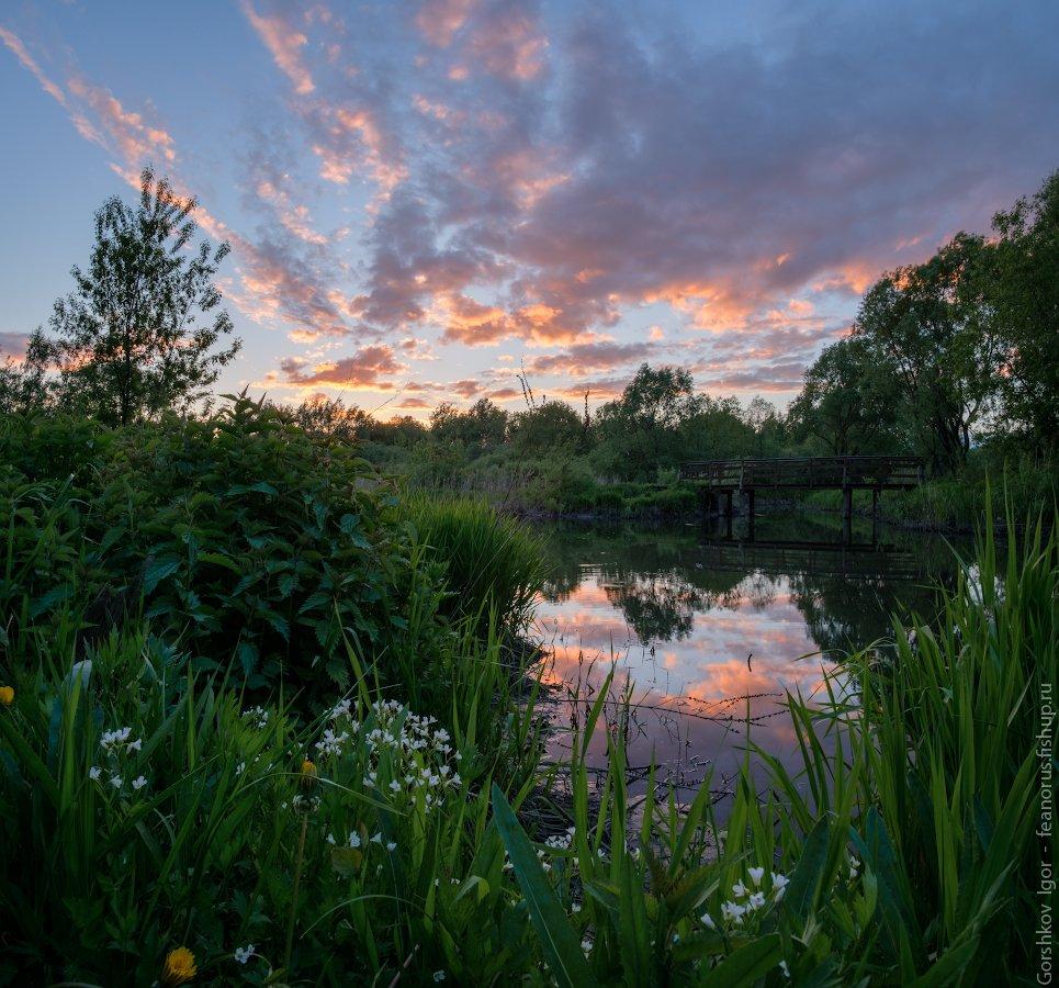 москва,свиблово,закат,река,яуза,трава,цветы, Горшков Игорь