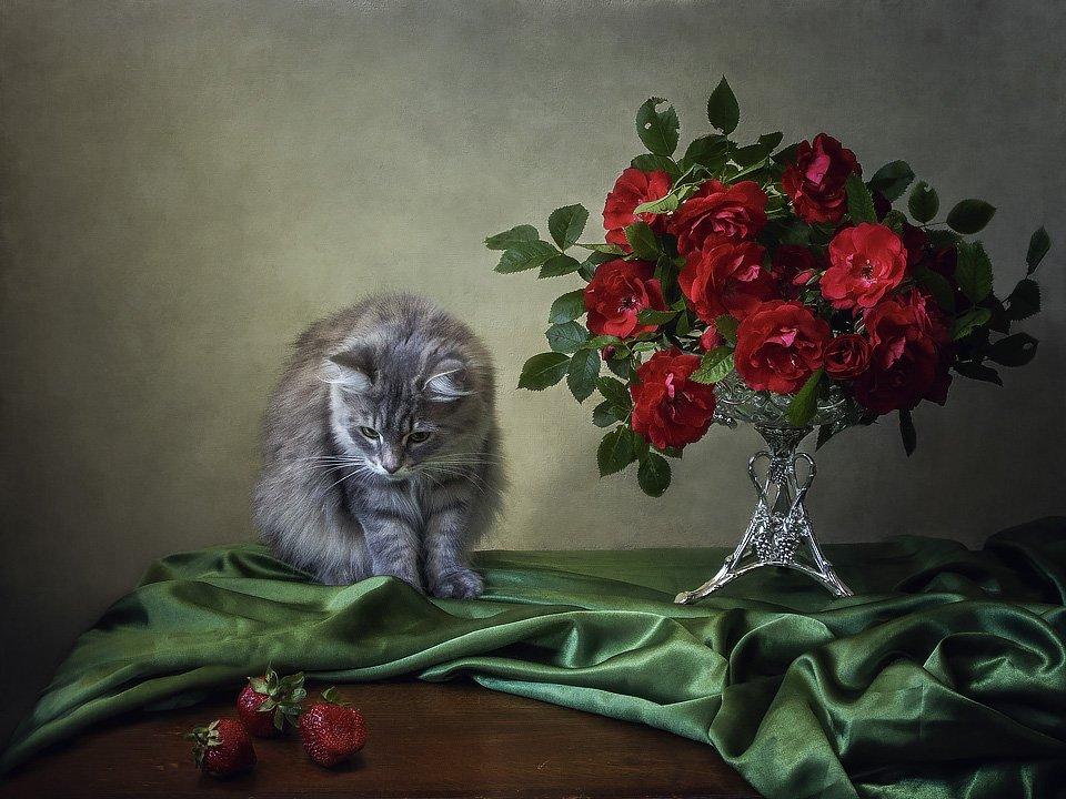 фото, домашние животные, кошки, кошка Масяня, розы, лето, букет, ваза, клубника, Ирина Приходько