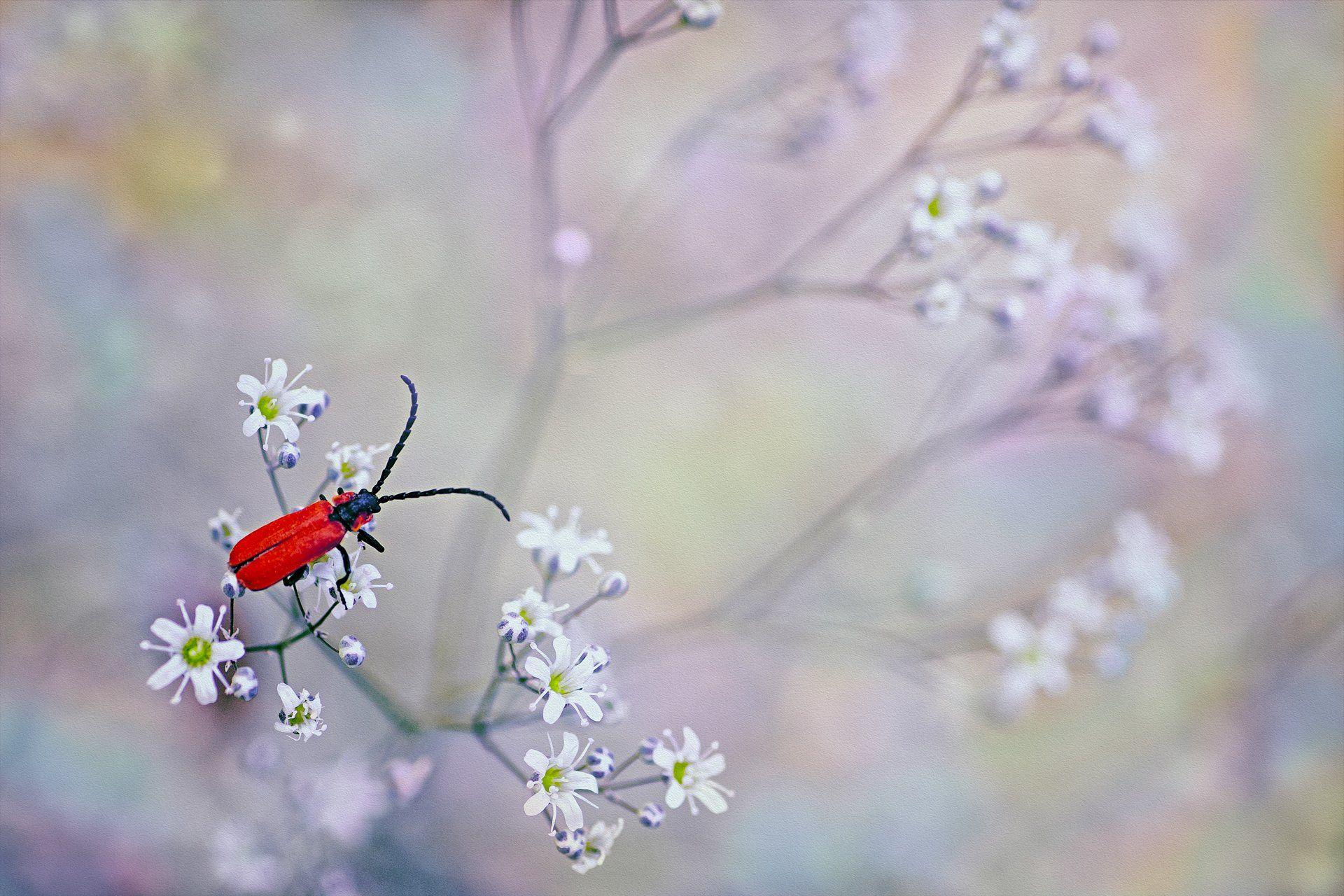 жук, кора, крылья, лапы, тень, черный, красный,цветы,свет,листья, Котов Юрий
