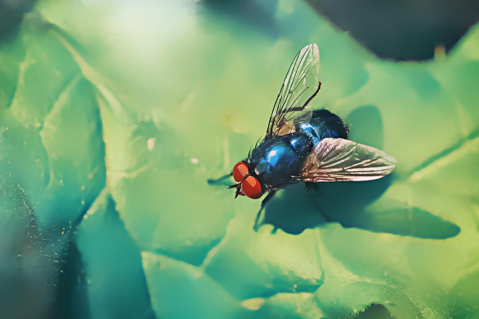 муха, жук, крылья, лист, хобот, свет, муравей, мошки, трава, Котов Юрий