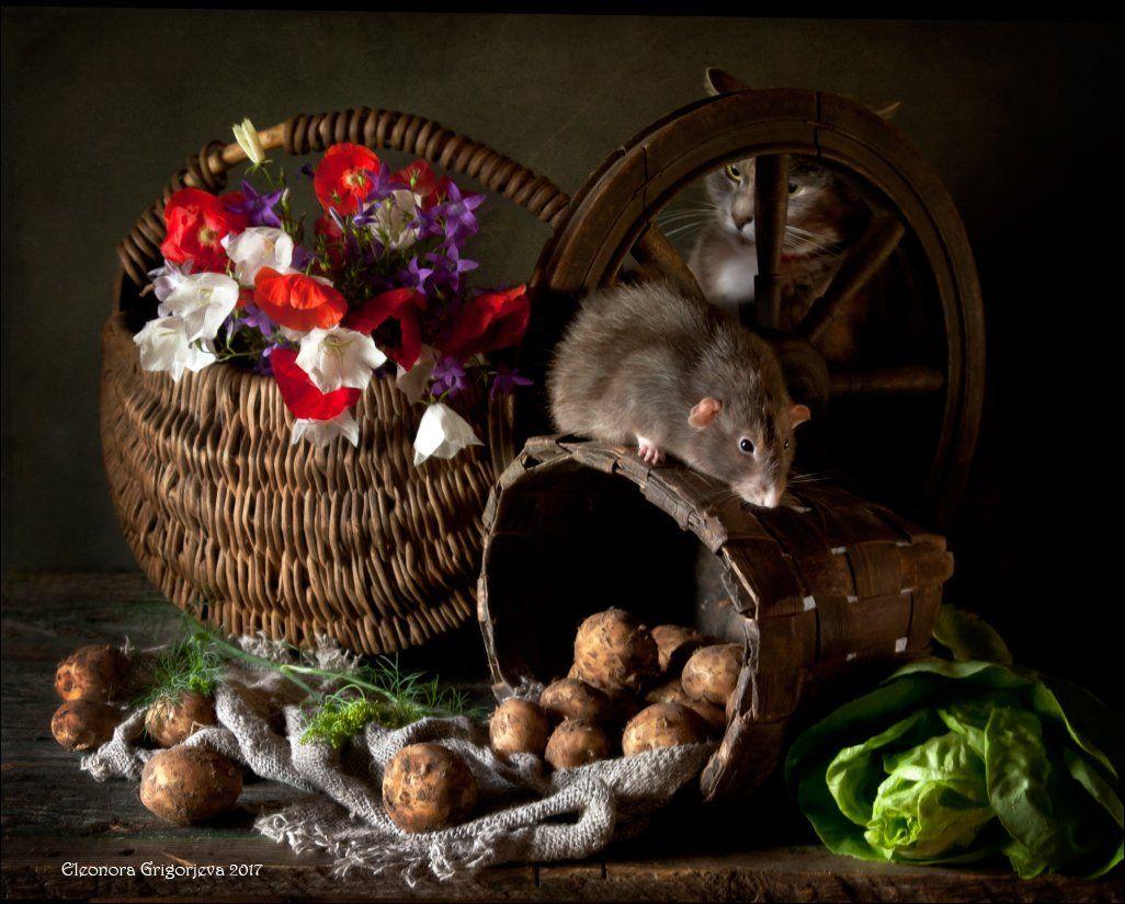 кошка, крыса, кошки-мышки, крысиные истории, натюркотики, Eleonora Grigorjeva
