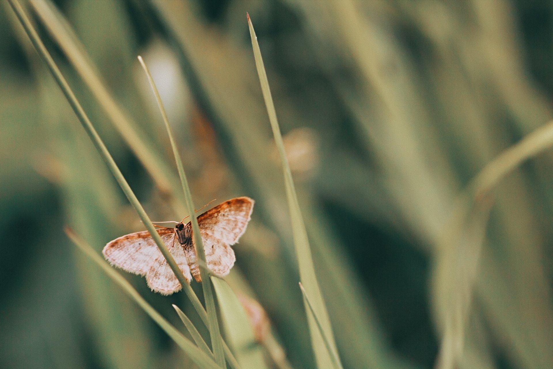 бабоча,жук,трава,дерево,настроение,свет,ель,хвоя, Котов Юрий