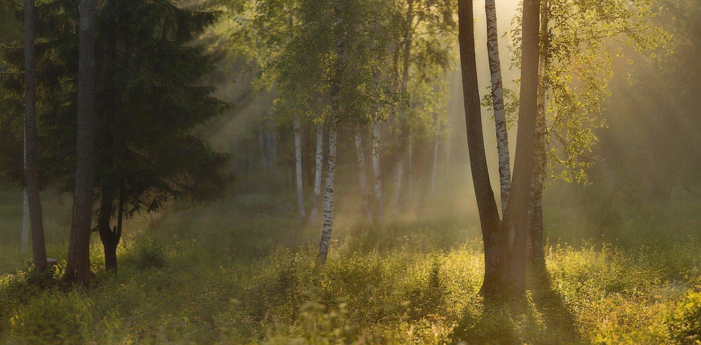 питер, лето, пушкин, царское, царское село, туман, царское,рассвет, Таня She (Aiya)