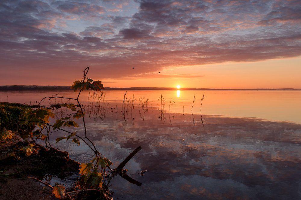 утро,рассвет,отражение,трава,небо,облака,лето, Юлия Лаптева
