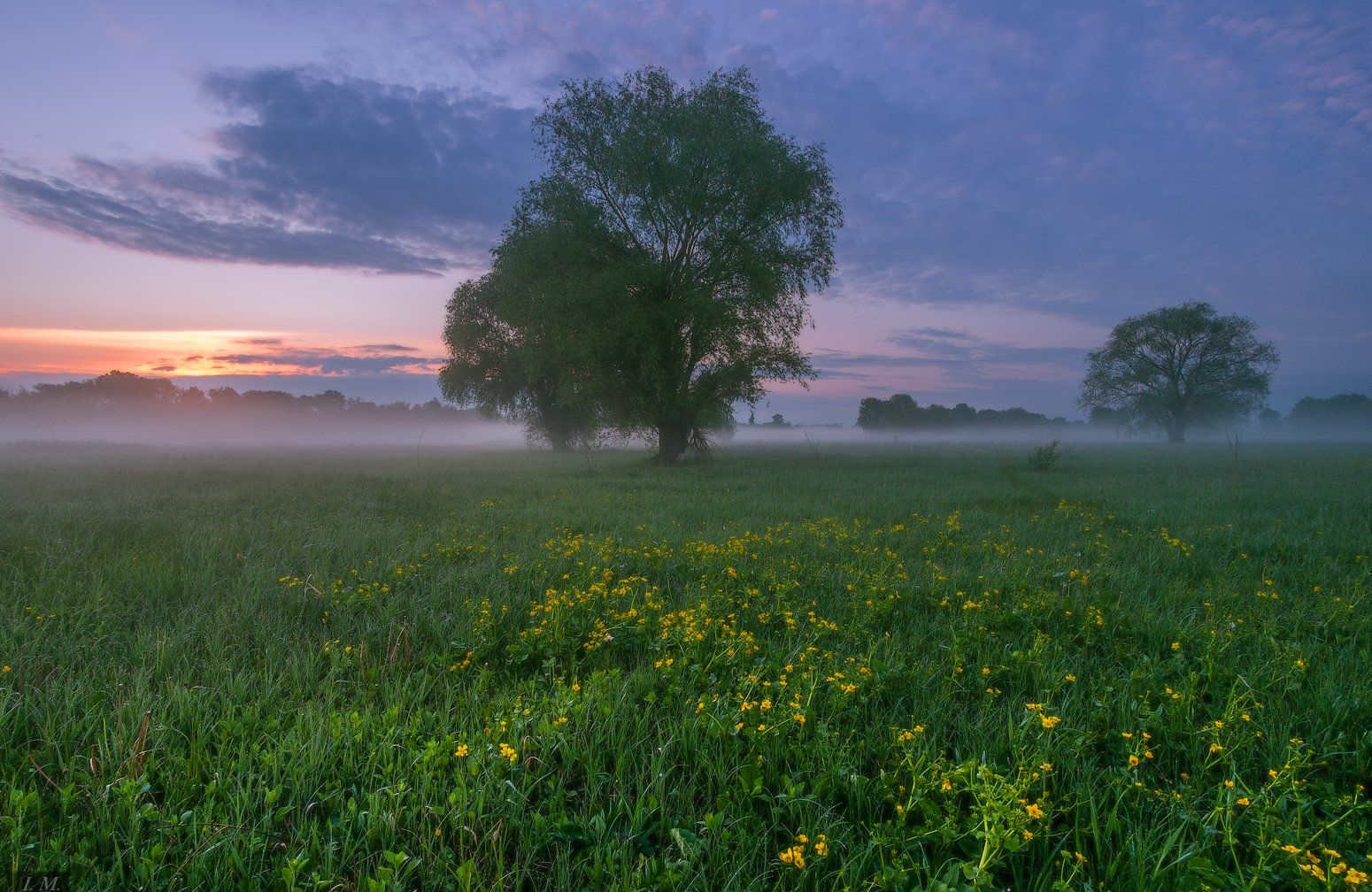 рассвет, утро, весна, луг, травы, дерево, туман, morning, fog, spring, sunrise, I'M