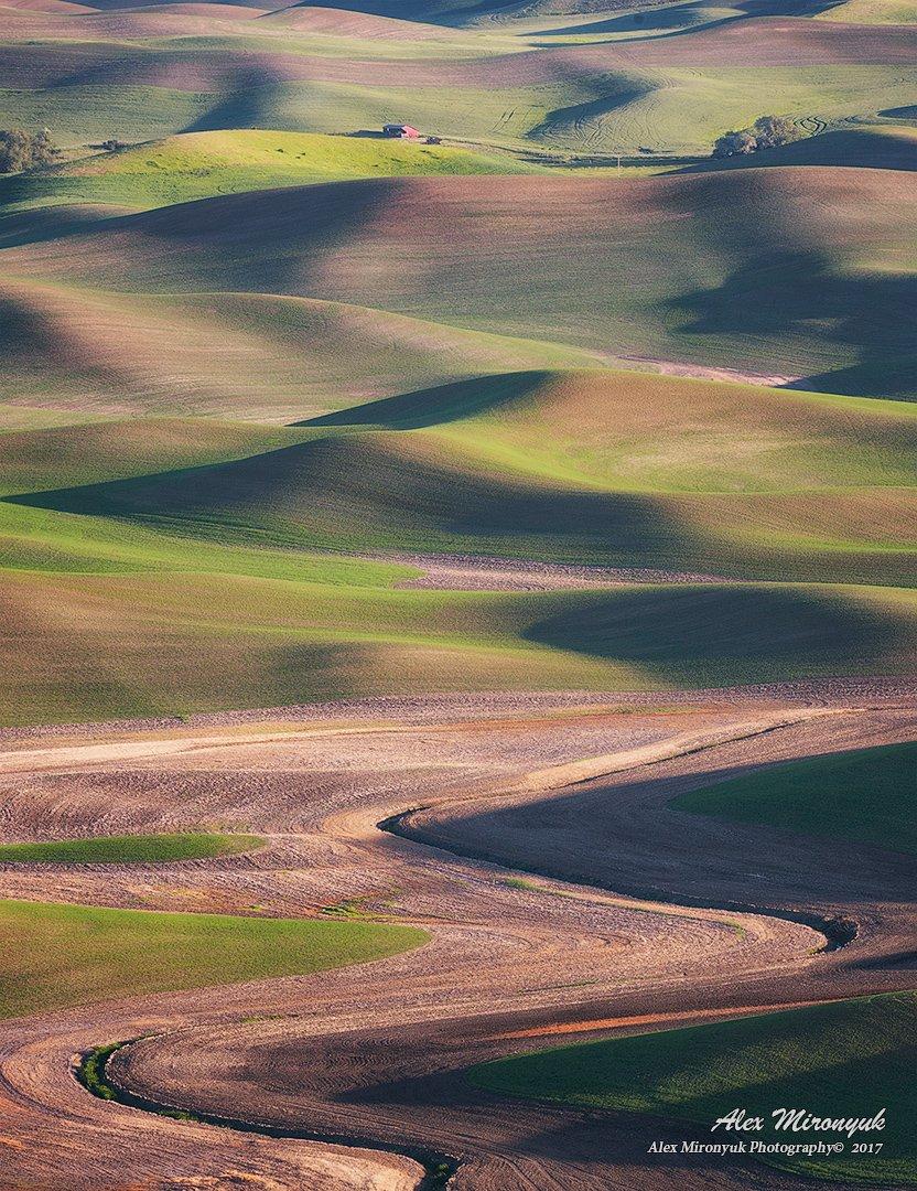 палуз, сша, вашингтон, поле, закат, рассвет, абстракция, пшеница, рожь, рапс, сельское хозяйство, холм, Alex Mironyuk