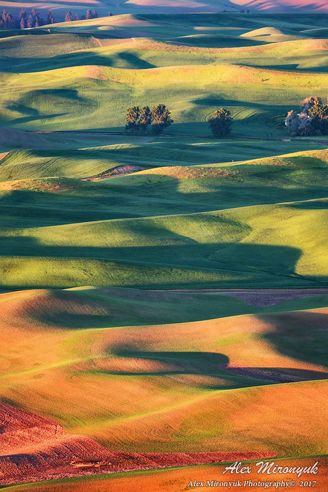 сша, путешествие, вашингтон, холм, абстракция, холм, пшеница, овес, рожь, рапс, рассвет, Alex Mironyuk