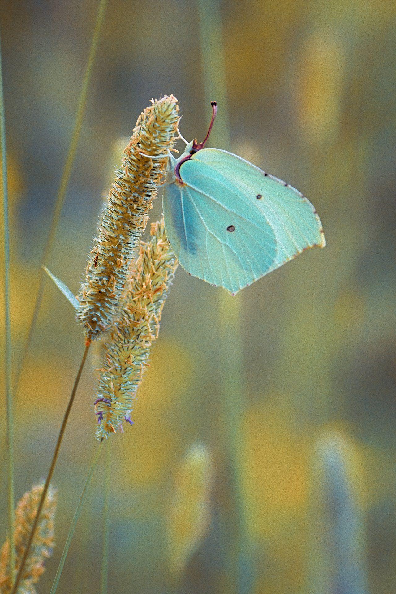 бабочка,цветы, желтый, лапки, цвет, Котов Юрий