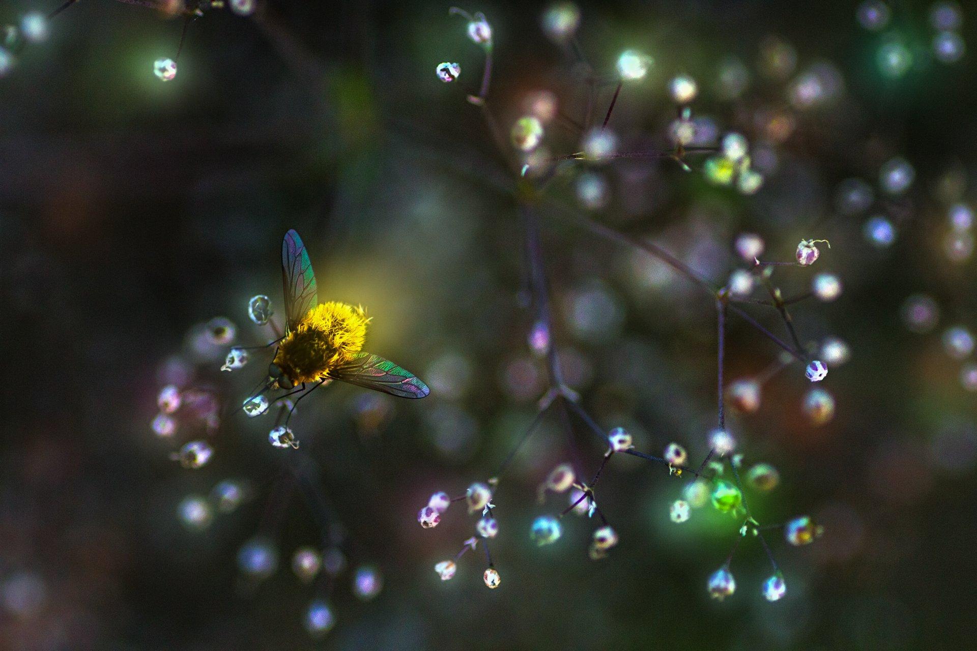 свет,трава,лучи,блики,муха,цветы,макро, Котов Юрий
