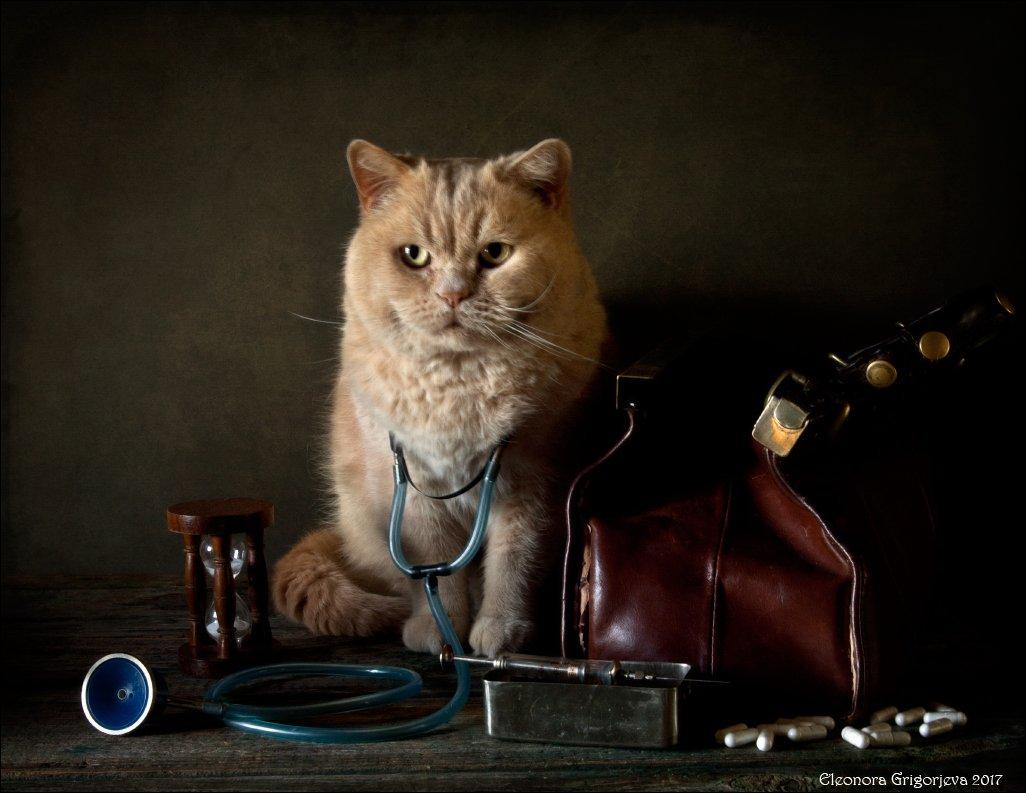 кот, врач, доктор, медик, любовь, мурлыка, ласка, натюркотики, Eleonora Grigorjeva
