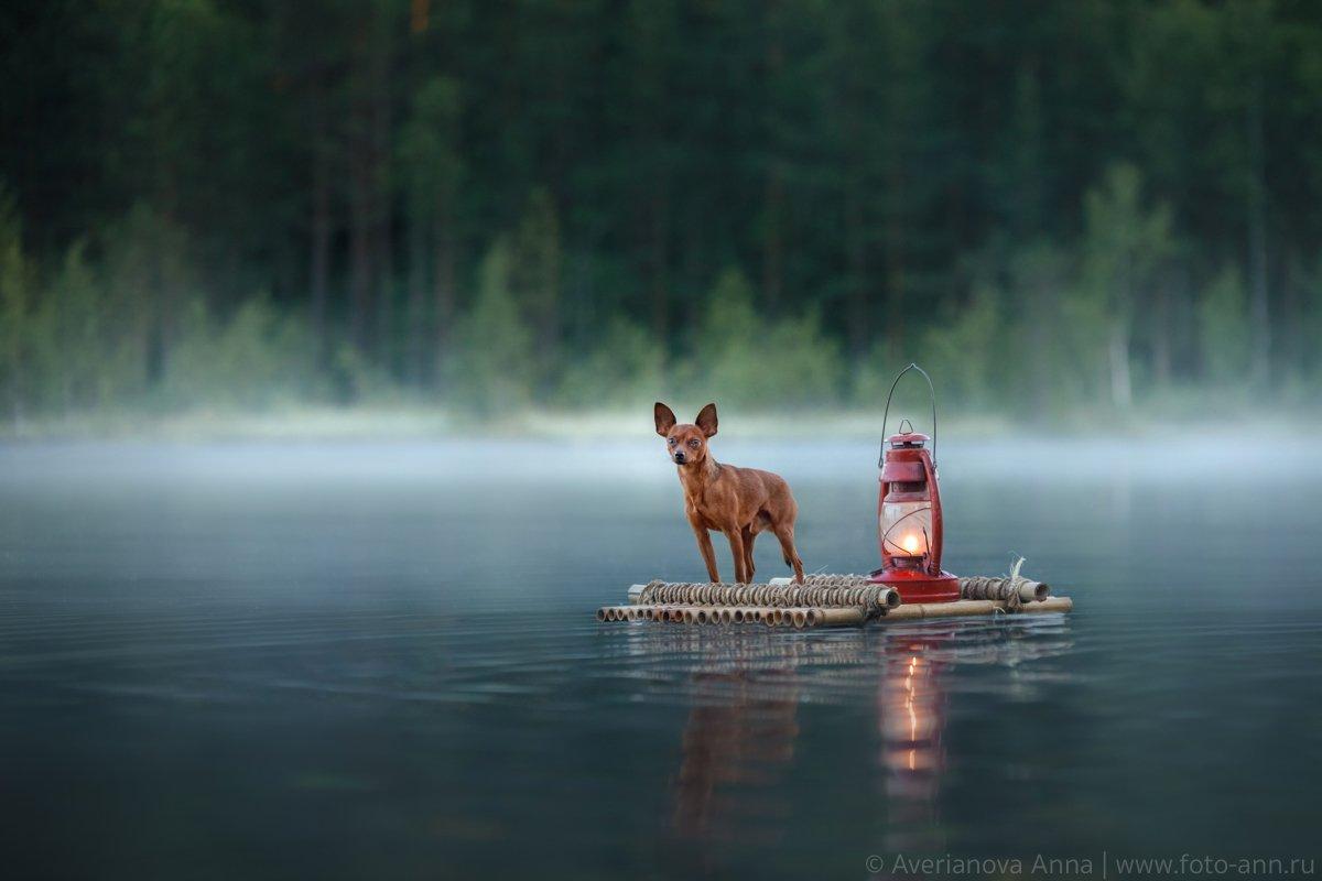 собака, природа, озеро, туман, утро, Анна Аверьянова