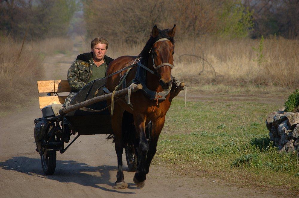 лошадь, повозка, Евгений Смердов