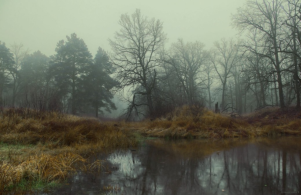осень, дубы, болото, Вячеслав
