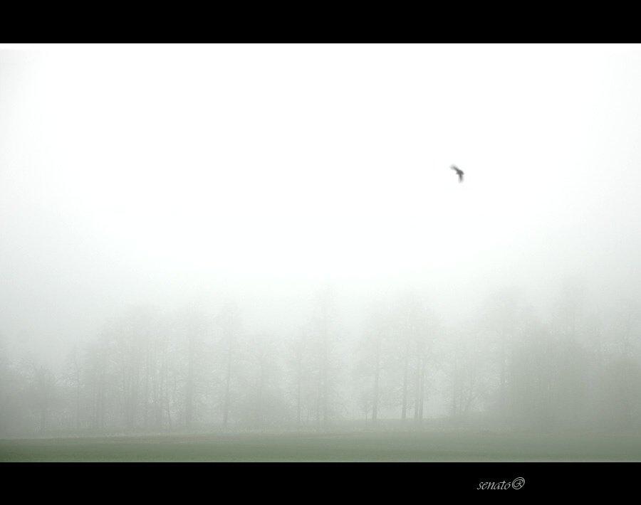 mist,fog,tree,morning,lark, senato®