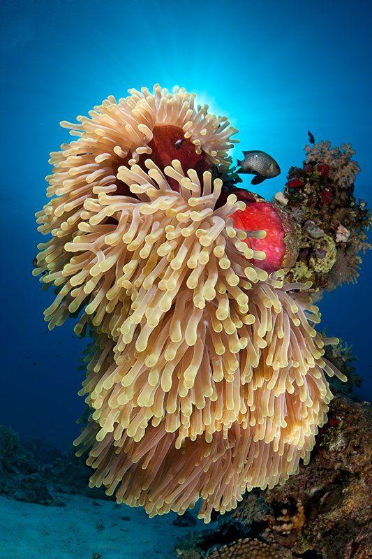 красное море, подводная съемка, риф, коралл, солнце, актиния, вода, лучи, свет, рыба, Natalia Pryanishnikova