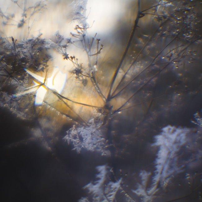 монокль, иней, трава, солнце, Ольга Брага (Eglantier)