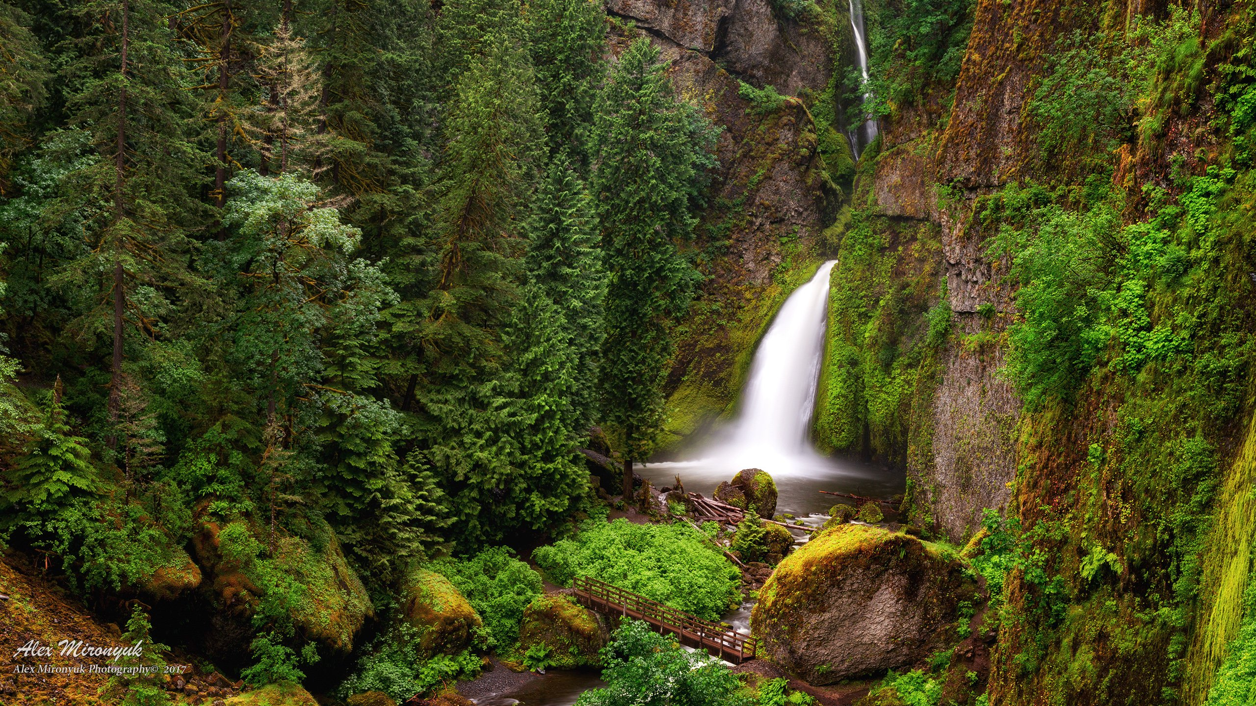сша, орегон, водопад, пейзаж, лес, скала, горы, ущелье, мох, мост, река, ручей, вода,, Alex Mironyuk