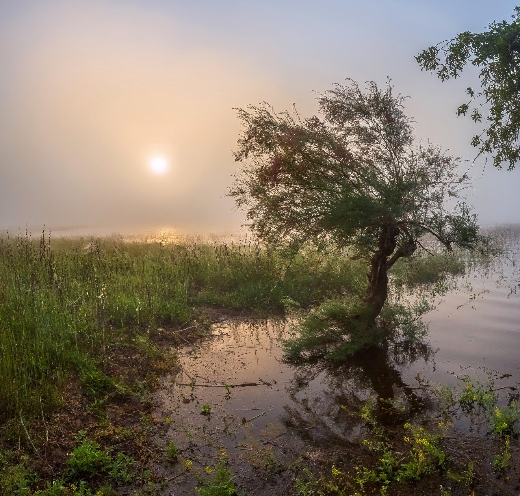весна, половодье, астраханская область, волга, река, рассвет, дерево, поволжье, вода, туман, тамарикс, солнце, Лашков Фёдор