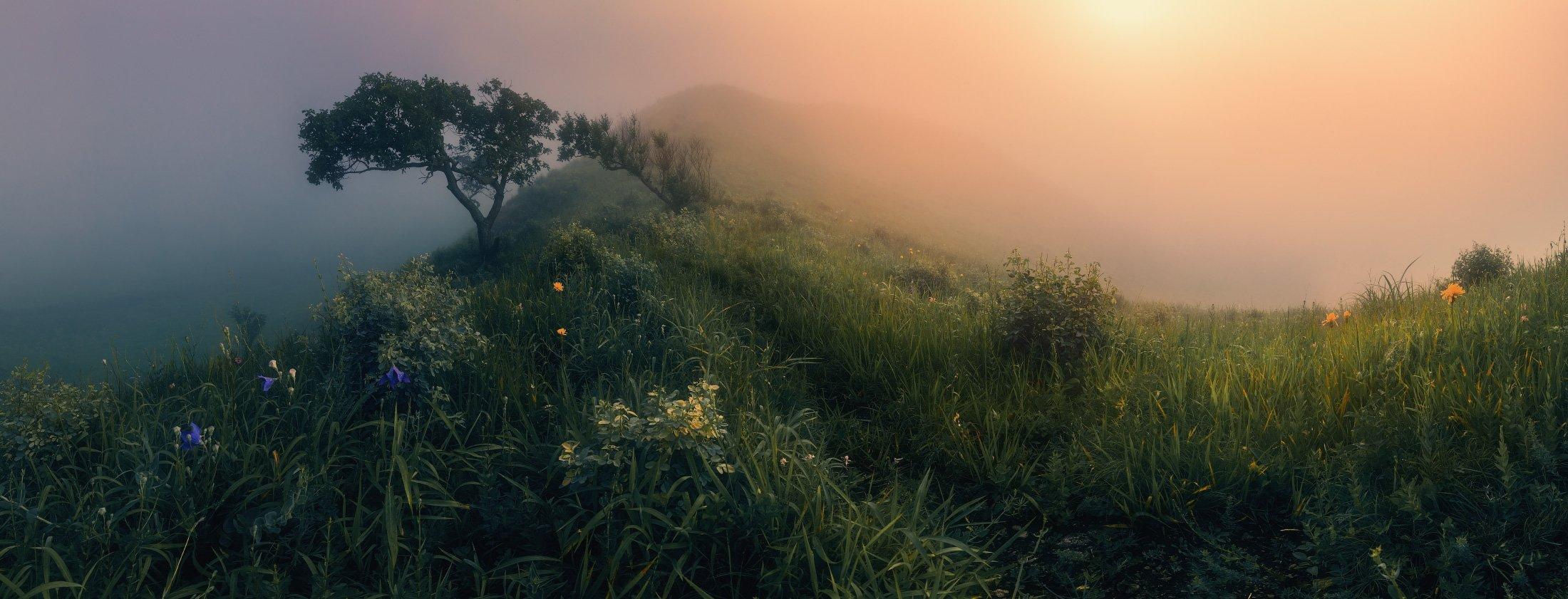 панорама, утро, туман, лето,, Андрей Кровлин
