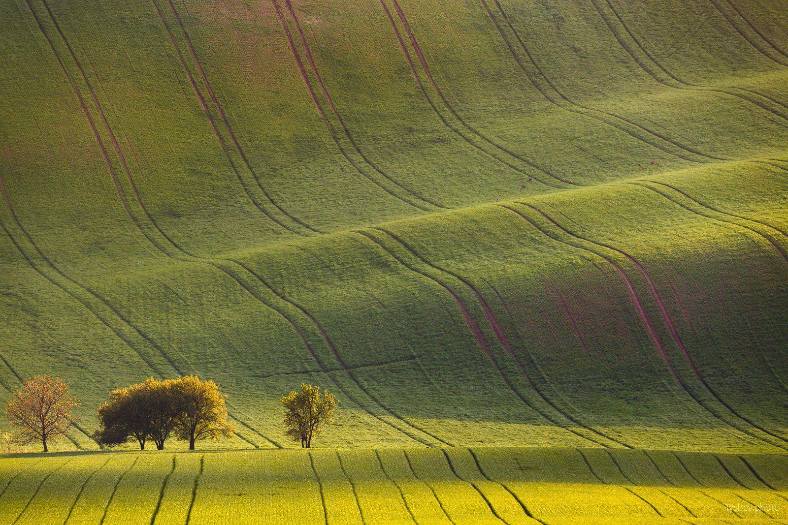 пейзаж, моравия, чехия, поля моравии, южная моравия,природа, деревья, свет, поля, волны, Дмитрий Илышев (ilyshev.photo)