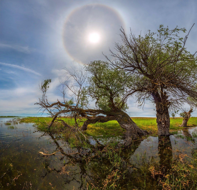 весна, река, астраханская область, деревья, солнечное гало, ивы, солнце, путешествие., Лашков Фёдор