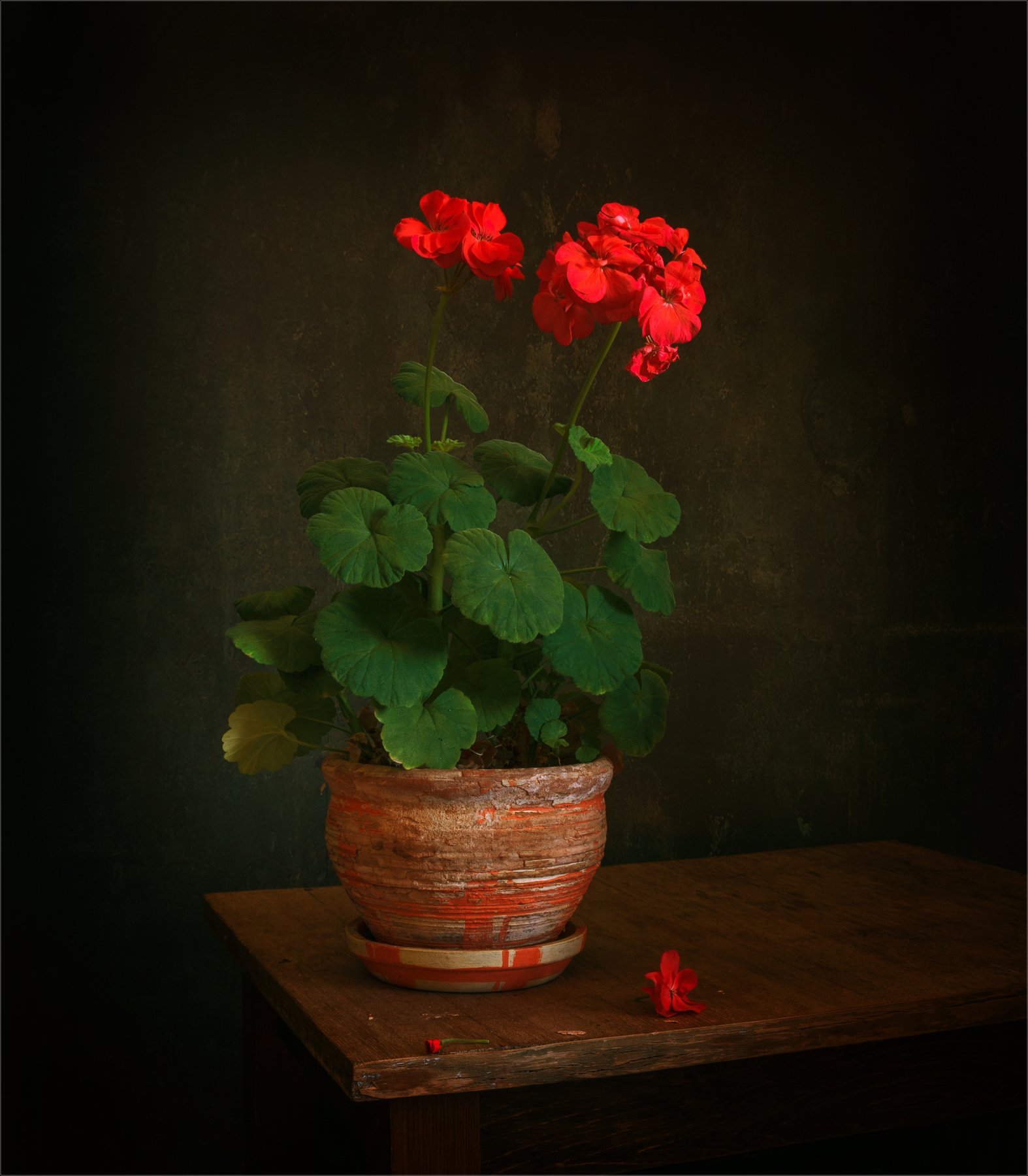 still life, натюрморт,   винтаж,  растение, герань, цветы, минимализм, Михаил MSH