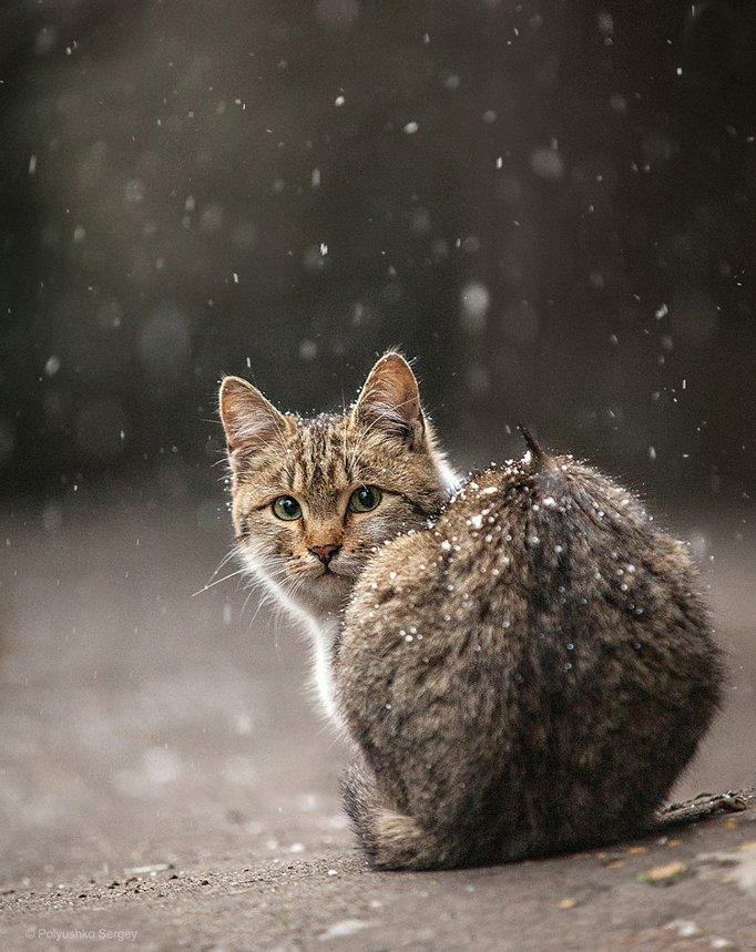 кот, котенок, Полюшко Сергей